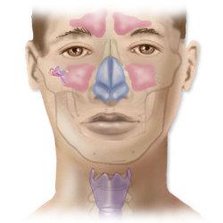 Fül -orr gége betegségei